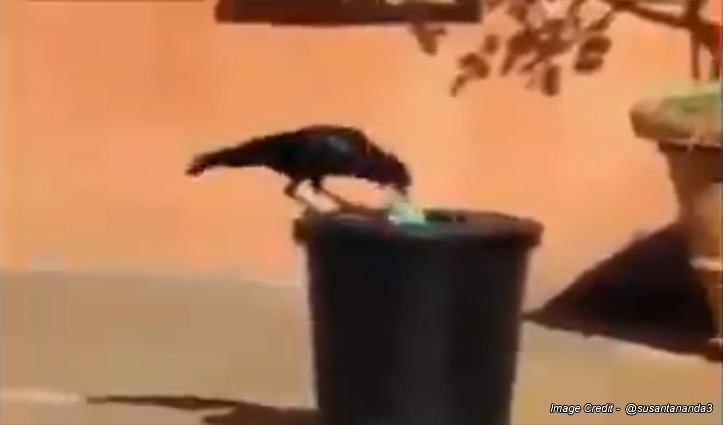 कूड़ेदान के बाहर बिखरा पड़ा था कचरा, कौवे ने किया कुछ ऐसा, वीडियो से आपको भी मिलेगी बड़ी सीख