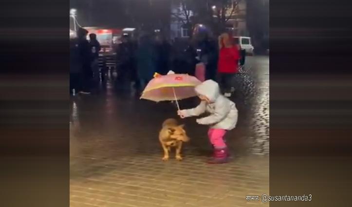 बारिश में भीग रहे बेजुबान को बचाने के लिए बच्ची ने किया ये काम, देखें वीडियो