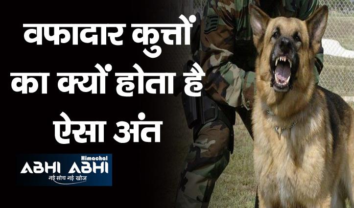 वफादार कुत्तों को आर्मी रिटायरमेंट के बाद मार देती है गोली-ये रही वजह