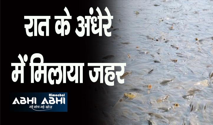 पशुओं को पानी पिलाने के लिए बनाए चैक डैम में मिला दिया जहर, सैकड़ों मछलियां मरीं