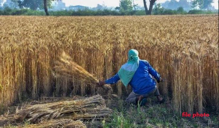 पूरा परिवार हुआ कोरोना संक्रमित तो खेतों में फसल काट गांववालों ने निभाया मानव धर्म