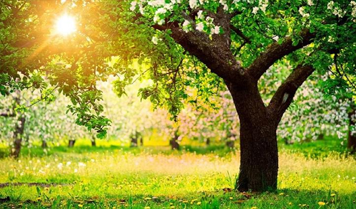 ये है अनोखा पेड़ टच करते ही इंसानों की तरह करता है हरकतें