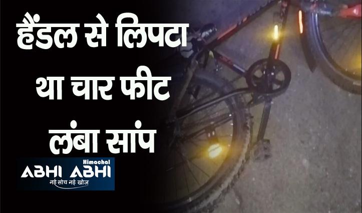 Himachal: आंगन में साइकिल चला रहा था किशोर, हैंडल से लिपटा था सांप, पढ़ें पूरा मामला