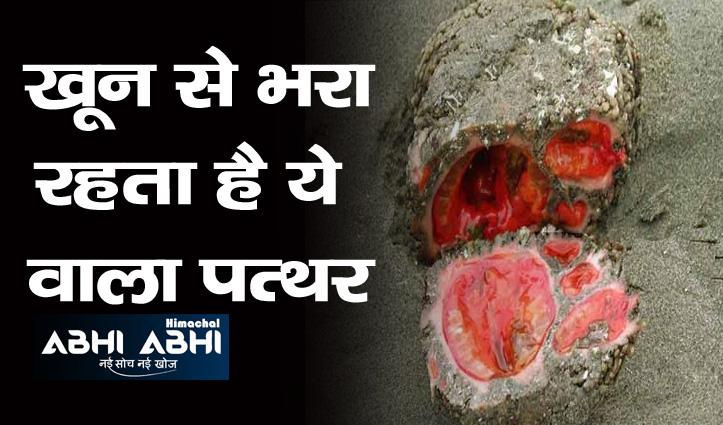 एक ऐसा पत्थर, जिसे तोड़ने पर निकलता है मांस-कच्चा खा जाते हैं लोग