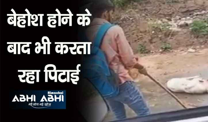कुत्ते की डंडे से निर्मम पिटाई का वीडियो वायरल, डाक सेवक के खिलाफ मामला दर्ज