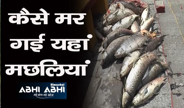 सिरमौर के रानीताल तालाब में मरी मछलियां, मत्स्य विभाग खोलेगा राज