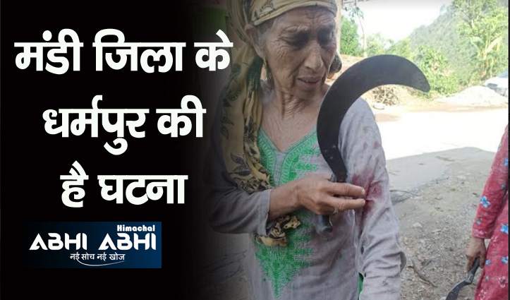 Himachal: दराटी लेकर तेंदुए से भीड़ गई 60 साल की बुजुर्ग, उल्टे पैर भागा तेंदुआ