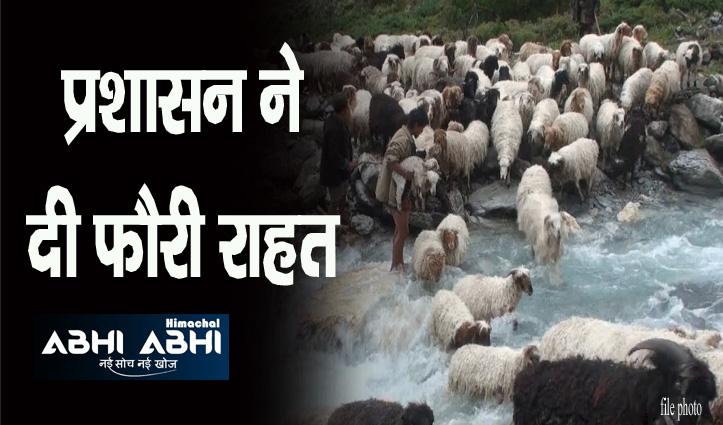हिमाचल: पुल टूटने से 36 भेड़-बकरियां नदी में बहीं, शिमला के डोडरा क्वार में हादसा