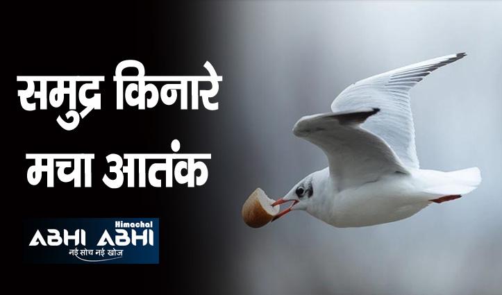 क्यूट सा दिखने वाला ये पक्षी कर रहा लोगों को लहूलुहान, ऐसा क्या हुआ जानिए