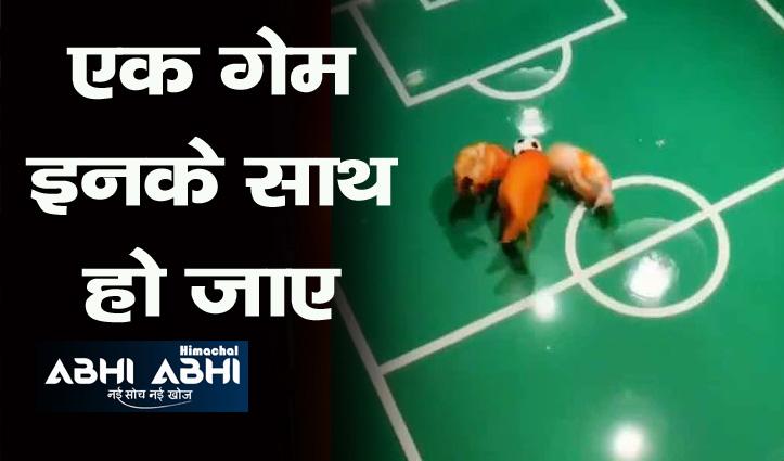 नन्ही मछलियों ने पानी में खेला फुटबॉल, देखिए कैसे किया गोल