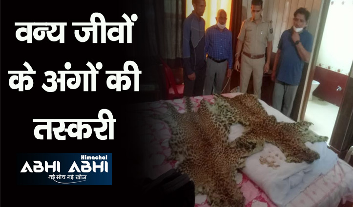 दिल्ली की टीम ने मंडी में तेंदुए की खाल, नाखून और दांत सहित धरा तस्कर