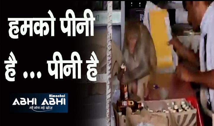 बोतल उठाई, ढक्कन खोला और गटागट पी गया बंदर, देखिए ये वायरल वीडियो