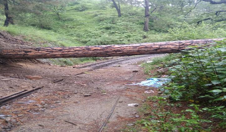 कालका-शिमला रेल मार्ग पर गिरा पेड़, गाड़ी के पहिए रुके-यात्री परेशान