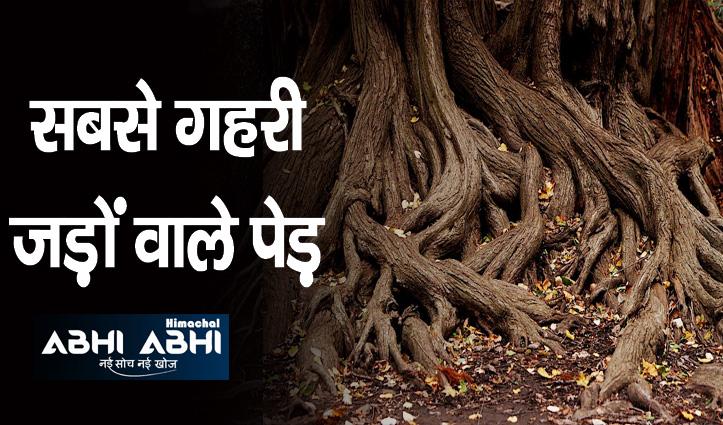 ना पीपल ना बरगद- इस पेड़ की जड़ें होती है सबसे गहरी