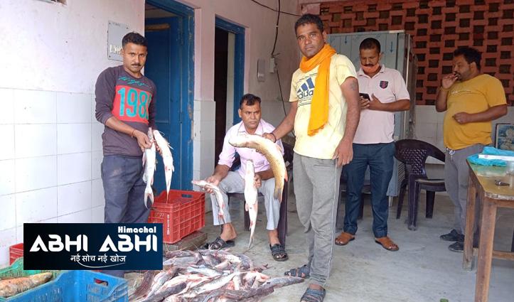 दो महीने का प्रतिबंध हटने के बाद आज से मछली बिकने पहुंची बाजार