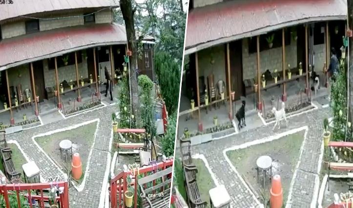 हिमाचल के मंदिर परिसर में कुत्ते को लेकर गई महिला, पुजारी से भी उलझी