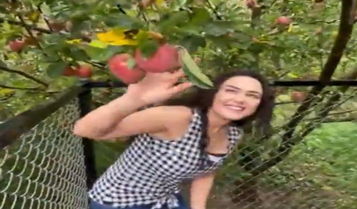 सेब से लदे पड़ों को देख उछल पड़ी डिंपल गर्ल, कहा- हिमाचल का सेब सबसे बढ़िया