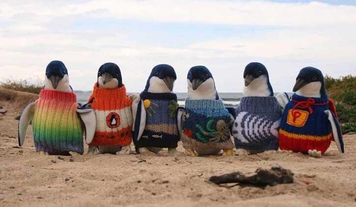 जिस उम्र में हाथ कांपने लगते हैं, ठीक से दिखाई नहीं देता, उस उम्र में अल्फी ने पेंगुइन्स के बुने स्वेटर