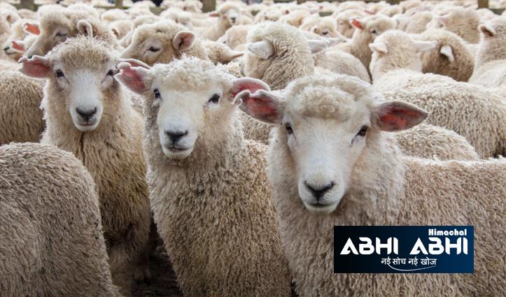 हिमाचल के दुर्गम इलाके में डोडरा क्वार में 200 भेड़-बकरियों की मौत