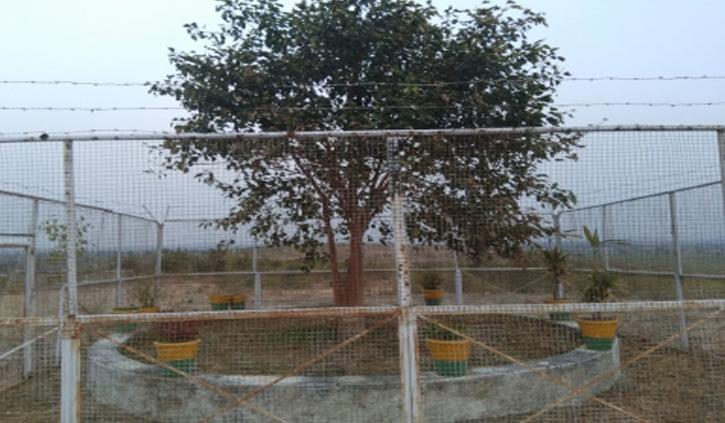 देश का एक अनोखा पेड़ जिसकी सुरक्षा में 24 घंटे तैनात रहते हैं सुरक्षा गार्ड