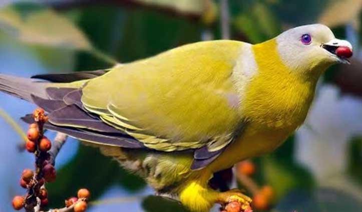 क्या आप जानते हैं, भारत में पाया जाने वाला यह पक्षी जमीन पर नहीं रखता पैर